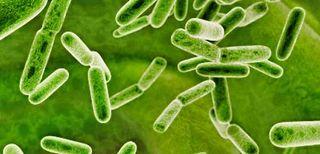 Probiotics (1)